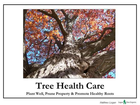 Matthew Logan Tree Health Care Plant Well, Prune Property & Promote Healthy Roots.