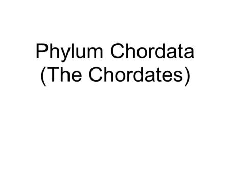 Phylum Chordata (The Chordates). What is a chordate? Classification: Kingdom Animalia, Phylum Chordata Four Phylum Characteristics Notochord: supportive.