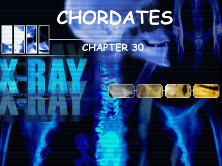 CHORDATES CHAPTER 30. Identify the characteristics that all chordates share Explain what vertebrates are. Describe the two groups of non- vertebrate chordates.