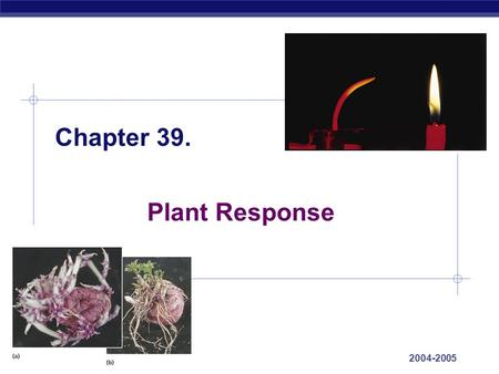 AP Biology 2004-2005 Chapter 39. Plant Response. AP Biology 2004-2005 Plant Reactions  Stimuli & a Stationary Life  animals respond to stimuli by changing.