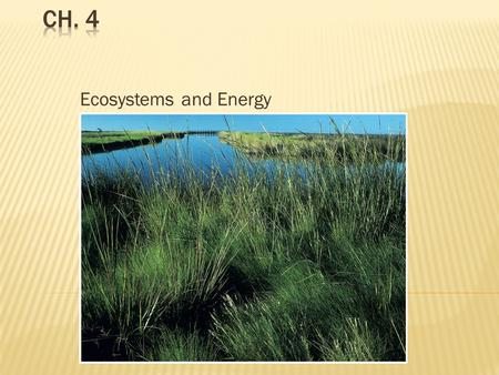 ecosystems to study the interactions between What does ecology have to do with me ecology also provides information about the benefits of ecosystems and how we to the complex interactions between.