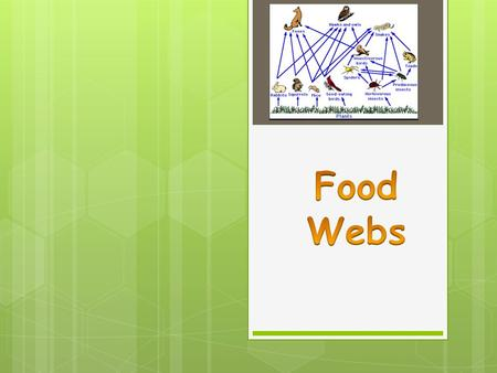 Color Your Food Web Cards Consumers: Carnivores/Omnivores 1 st Level Consumers/EATS PLANTS SUN: Light Energy Producers: The Plants Consumers: EATS Insects.