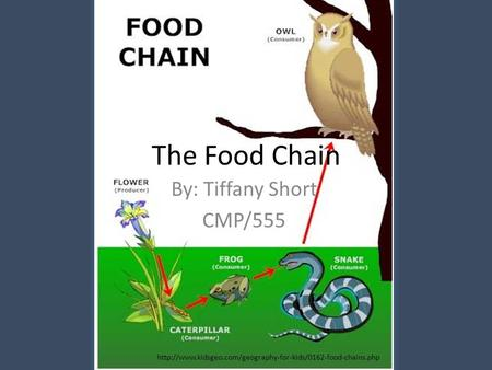 The Food Chain By: Tiffany Short CMP/555