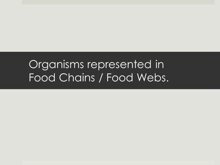 Organisms represented in Food Chains / Food Webs..
