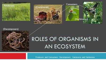 ROLES OF ORGANISMS IN AN ECOSYSTEM Producers and Consumers: Decomposers, Carnivores and Herbivores Producers Consumers (Carnivores) (Herbivores) (Decomposers)