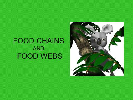 FOOD CHAINS AND FOOD WEBS What do you think a scavenger is?