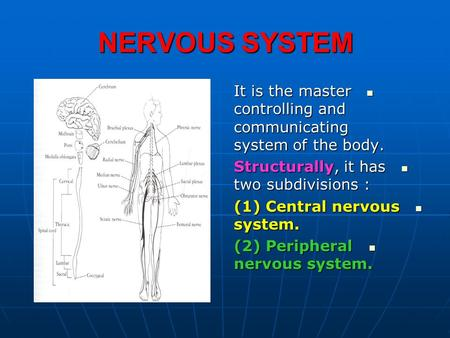 NERVOUS SYSTEM It is the master controlling and communicating system of the body. It is the master controlling and communicating system of the body. Structurally,