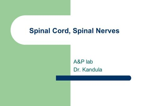 Spinal Cord, Spinal Nerves A&P lab Dr. Kandula. Anatomy of Spinal Cord.