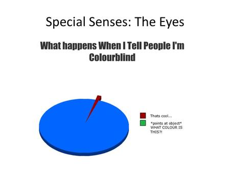 Special Senses: The Eyes