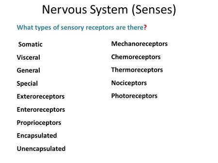 What types of sensory receptors are there? Nervous System (Senses) Somatic Visceral General Special Exteroreceptors Enteroreceptors Proprioceptors Encapsulated.