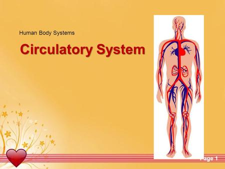 Human Body Systems Circulatory System.