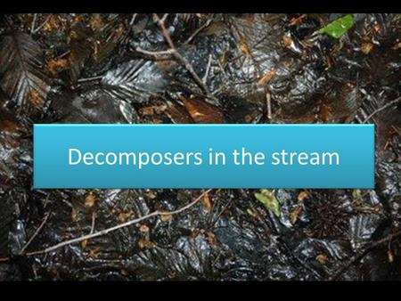 Decomposers in the stream. When we think of fungi, we usually think of mold on our food or mushrooms.