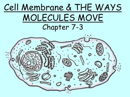 Cell Membrane & THE WAYS MOLECULES MOVE Chapter 7-3