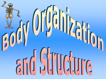 Body Organization and Structure.