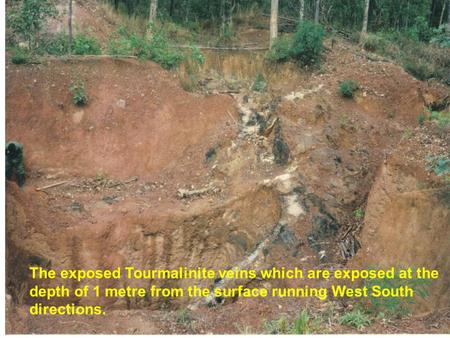 The exposed Tourmalinite veins which are exposed at the depth of 1 metre from the surface running West South directions.