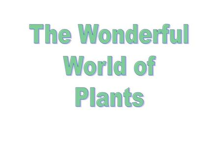 Plants who eat Not common Examples include Venus Fly Trap, Sundew and Pitcher plant Use ENZYMES :chemicals that break big molecules into small molecules.