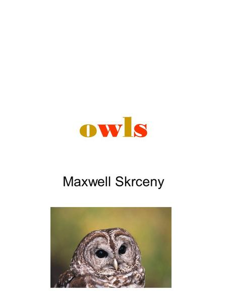 Owlsowls Maxwell Skrceny. 2 Table of Contents How big can owls get? P 3 Where do owls live? P4 Do owls have ears? P5 Do owls eat plants P 6 Fun facts.