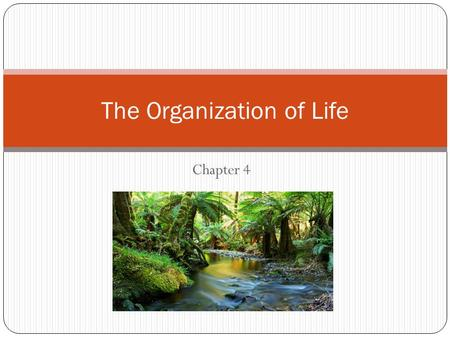 Chapter 4 The Organization of Life. Susquehanna River Ecosystem Draw all 10 circled items from the list, PLUS 5 more uncircled items of your choice.