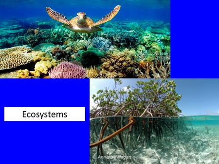 Ecosystems. Environment and Habitat Environment Abiotic factors Biotic factors Habitat Specific place where organism is found Marine - characterized primarily.