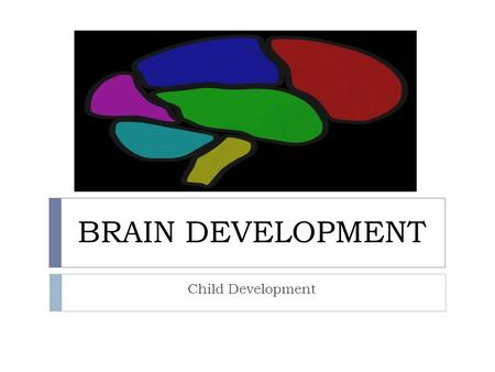 BRAIN DEVELOPMENT Child Development. Ticket to Class What do the following have to do with the human brain?  Walnut Half:  Blue Cheese :  Grain of.