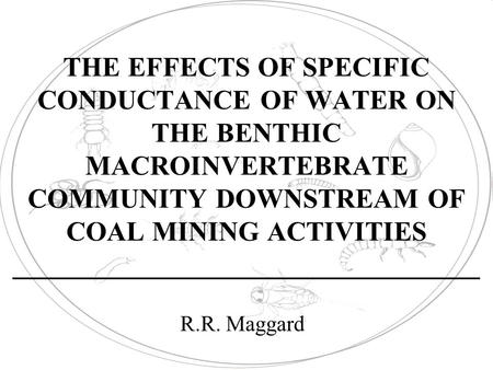 THE EFFECTS OF SPECIFIC CONDUCTANCE OF WATER ON THE BENTHIC MACROINVERTEBRATE COMMUNITY DOWNSTREAM OF COAL MINING ACTIVITIES __________________________________.