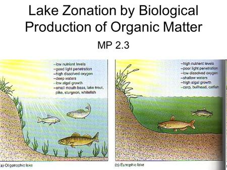 Lake Zonation by Biological Production of Organic Matter MP 2.3.