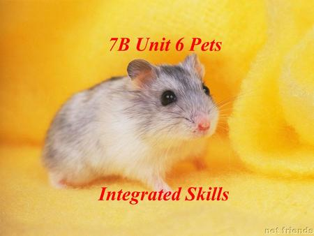 7B Unit 6 Pets Integrated Skills. Which is your favourite animal ? Can you tell me why ? I like my________ because ___________. dog.