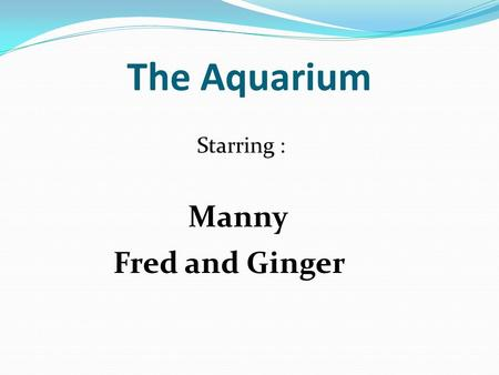The Aquarium Starring : Fred and Ginger Manny Manny was bored one summer vacation so he went to the local pet store. He decided to buy a pet that was.