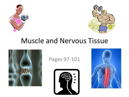 Muscle and Nervous Tissue Pages 97-101.  Function: ◦ contract (shorten) to produce movement  Three types: 1.Skeletal muscle 2.Cardiac muscle 3.Smooth.