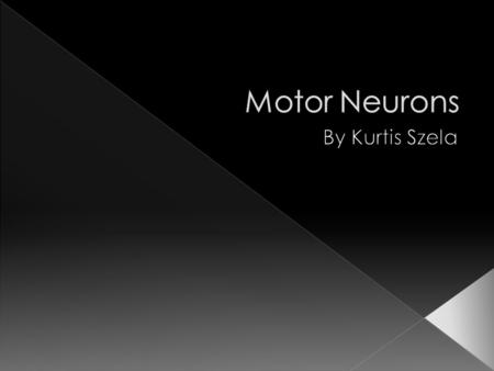  Carry impulses from the Central Nervous System to perform muscle movement  Motor Neurons are known as the control muscle  They directly or indirectly.