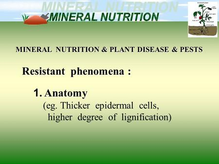 MINERAL NUTRITION & PLANT DISEASE & PESTS Resistant phenomena : 1. Anatomy (eg. Thicker epidermal cells, higher degree of lignification)