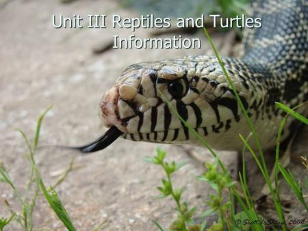 Unit III Reptiles and Turtles Information. Introduction to Snakes Class Reptilia, Order Squamata Class Reptilia, Order Squamata 38 species of snakes in.