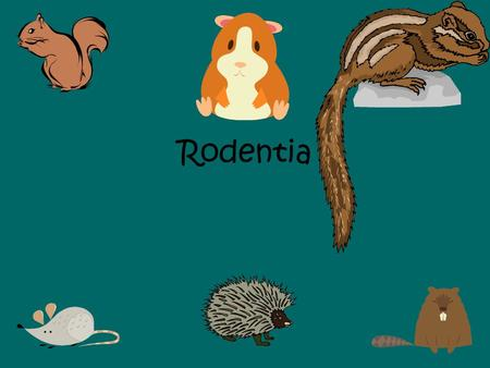 Rodentia. The single largest group of mammals is the rodentia. Most non-flying mammals are rodents. There are about 1500 living species of rodents (out.