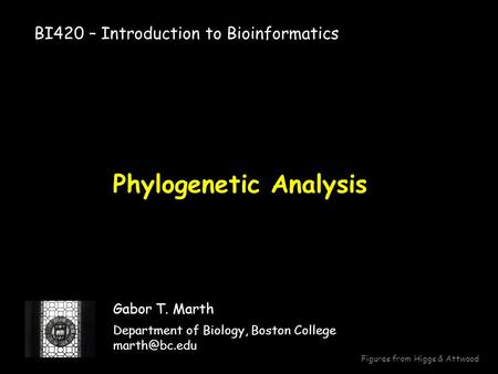 Phylogenetic Analysis Gabor T. Marth Department of Biology, Boston College BI420 – Introduction to Bioinformatics Figures from Higgs & Attwood.