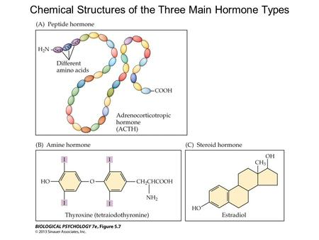 Chemical Structures of the Three Main Hormone Types.