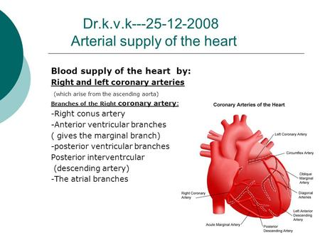 Dr.k.v.k---25-12-2008 Arterial supply of the heart Blood supply of the heart by: Right and left coronary arteries (which arise from the ascending aorta)