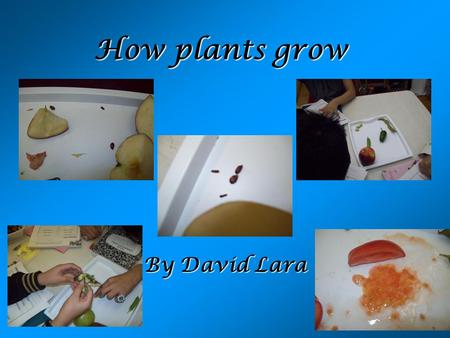How plants grow By David Lara. Seeds Seeds have different colors Seeds have different shapes Seeds come in different ways Seeds do not always need soil.