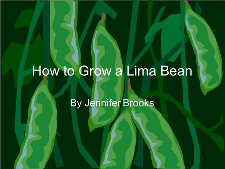 How to Grow a Lima Bean By Jennifer Brooks. What is in soil? Pieces of rocks that have been broken down Water Minerals and nutrients Air Sticks, leaves,