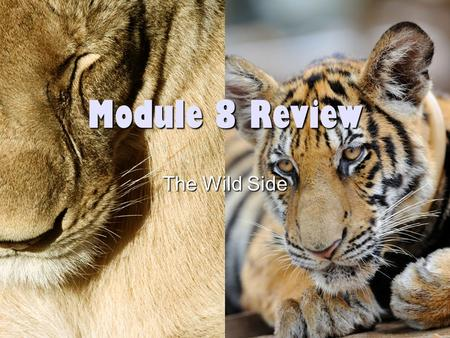 Module 8 Review The Wild Side. Challenges Wild animals –You can't position them –Hard to get close to them –Can be dangerous Pets –They can get too close.