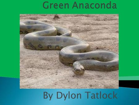 By Dylon Tatlock.  The vertebrate group of the Green anaconda is reptiles.  The scientific name is Eunectes murinus.  The lifespan of the green anaconda.