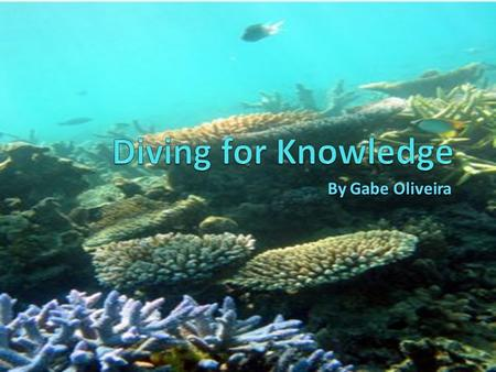 By Gabe Oliveira. Meet Gabe The Diver Hi. I'm a scuba diver named Gabe and I'm writing this journal to share my experiences of being in the ocean and.