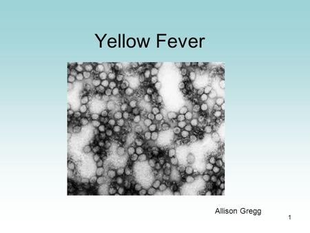 1 Yellow Fever Allison Gregg. 2 General History thousands of years old originated in Africa brought to the U.S. in the 1500s.