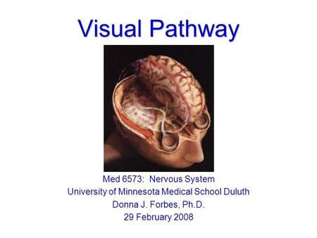 Visual Pathway Med 6573: Nervous System University of Minnesota Medical School Duluth Donna J. Forbes, Ph.D. 29 February 2008.