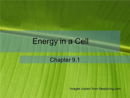 Energy in a Cell Chapter 9.1 Images copied from ftexploring.com.