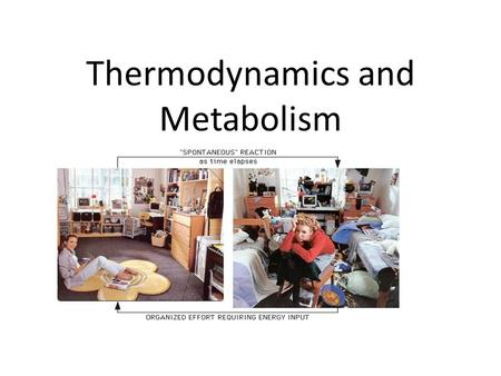 Thermodynamics and Metabolism. Thermodynamics: the science of energy transformations (flow of energy through living and non- living systems)