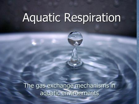 Aquatic Respiration The gas exchange mechanisms in aquatic environments.