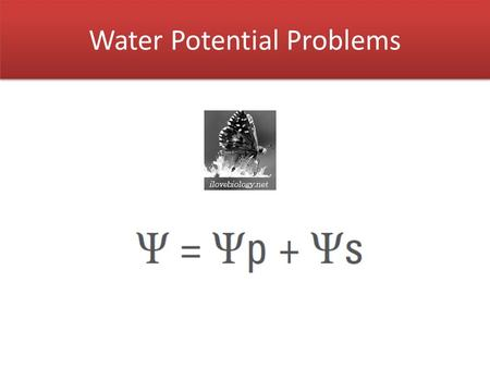 Water Potential Problems. Water Potential (  ) Water potential of pure water in an open container is 0.