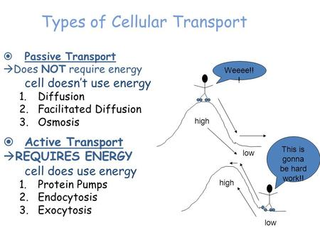 Types of Cellular Transport  Passive Transport  Does NOT require energy cell doesn't use energy 1.Diffusion 2.Facilitated Diffusion 3.Osmosis  Active.