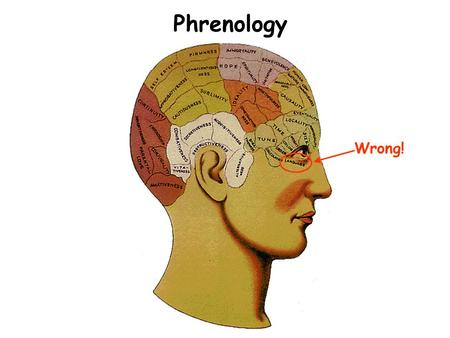 Phrenology Wrong!. Outer Surface of Human Brain Gray Matter = Neuron cell bodies & dendrites White Matter = Myelin (=fat)- covered axons Cortex = Outer.