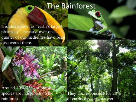 "The Rainforest It is also known as ""earth's largest pharmacy"", because over one quarter of our medicines have been discovered there. Around 40%-75% of."